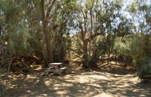 Camp Site E-6